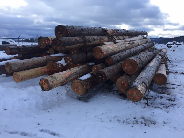 Fire killed Cedar Logs